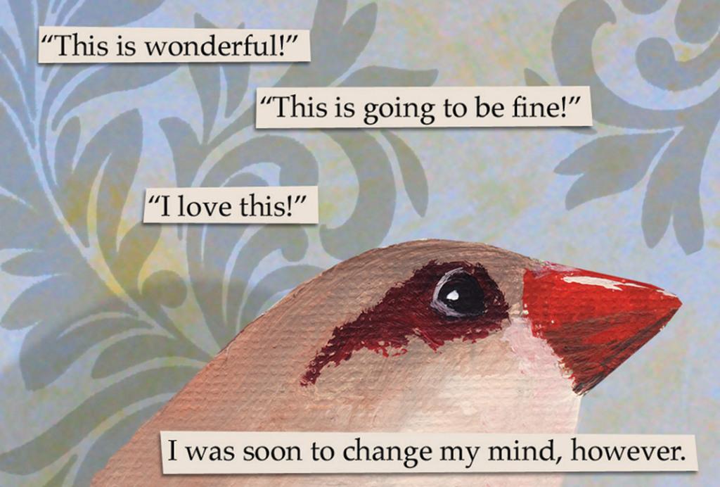 troubled bird