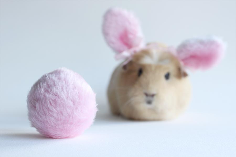 Bunny dreams.