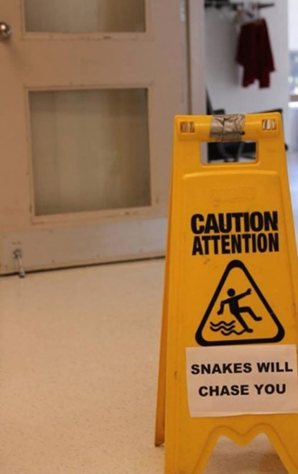 Why did it have to be snakes!?